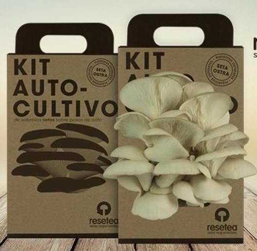 Kit de cultivo setas de ostra