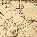 Elefante muerto por sobredosis de LSD